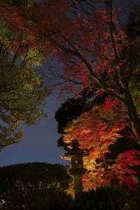 六義園紅葉ライトアップの写真素材 [FYI01227148]