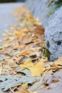 落ち葉の写真素材 [FYI01227397]