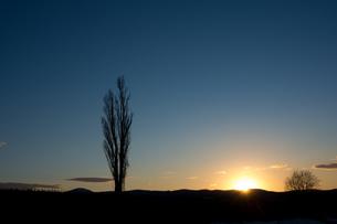 春の夕焼け空とポプラの写真素材 [FYI01227740]