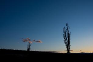 春の夕焼け空とポプラの写真素材 [FYI01227741]