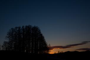 夕焼け空とカラマツ林の写真素材 [FYI01227742]
