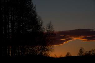 夕焼け空とカラマツ林の写真素材 [FYI01227743]