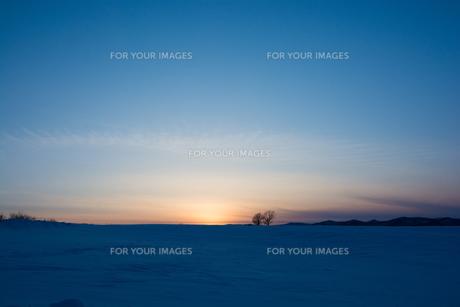 夕暮れの雪の丘と冬木立 美瑛町の写真素材 [FYI01227752]