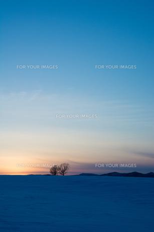 夕暮れの雪の丘と冬木立 美瑛町の写真素材 [FYI01227755]
