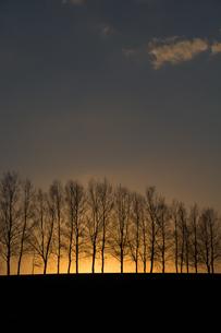 夕焼け空と冬枯れのシラカバ並木 美瑛町の写真素材 [FYI01227763]