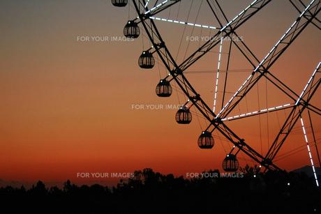 夕暮れ時の葛西臨海公園の観覧車の写真素材 [FYI01227825]