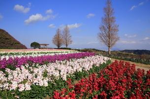 12月の花さじきの写真素材 [FYI01227834]
