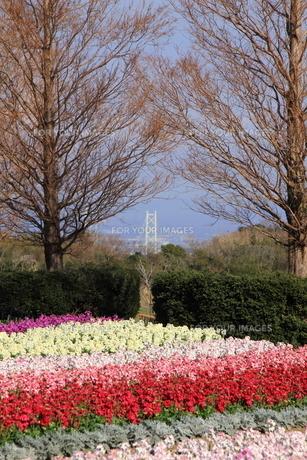 12月の花さじきの写真素材 [FYI01227835]