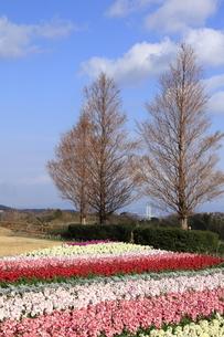 12月の花さじきの写真素材 [FYI01227836]