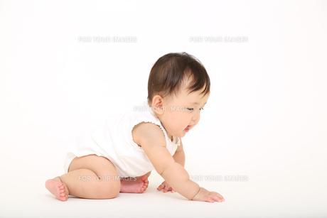白バックでハイハイする1人の女の子の赤ちゃんの写真素材 [FYI01227920]