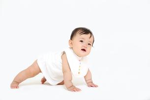 白バックでハイハイする1人の女の子の赤ちゃんの写真素材 [FYI01227950]