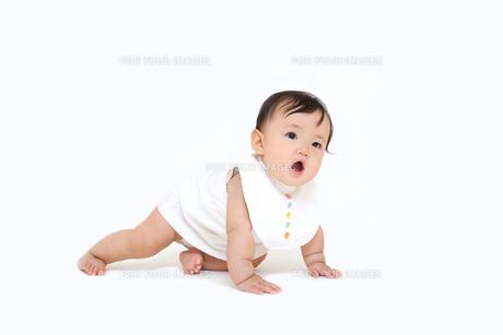 白バックでハイハイする1人の女の子の赤ちゃんの写真素材 [FYI01227952]