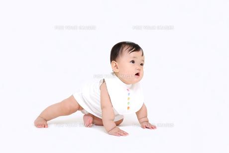 白バックでハイハイする1人の女の子の赤ちゃんの写真素材 [FYI01227953]