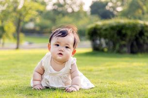 屋外の緑地でハイハイする赤ちゃん。新生児、育児、健康、成長イメージの写真素材 [FYI01228004]