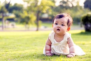 屋外の緑地でハイハイする赤ちゃん。新生児、育児、健康、成長イメージの写真素材 [FYI01228005]