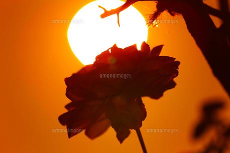 花の写真素材 [FYI01228136]