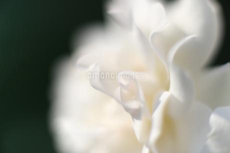 花の写真素材 [FYI01228139]