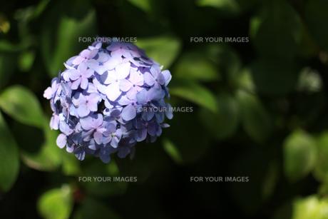 花の写真素材 [FYI01228150]