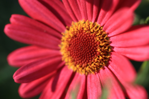花の写真素材 [FYI01228151]