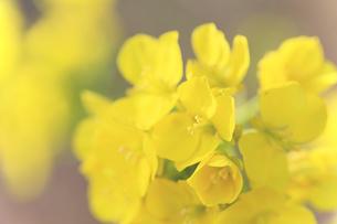 花の写真素材 [FYI01228154]