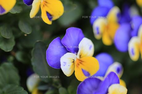 花の写真素材 [FYI01228156]