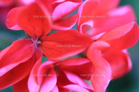 花の写真素材 [FYI01228158]