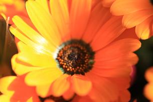 花の写真素材 [FYI01228159]