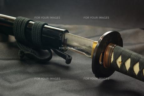 抜きかけの居合刀の写真素材 [FYI01228336]