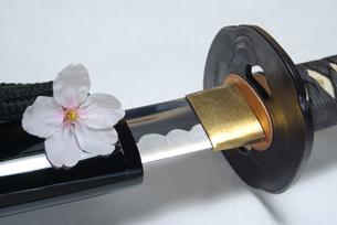 刀と桜の花の写真素材 [FYI01228346]