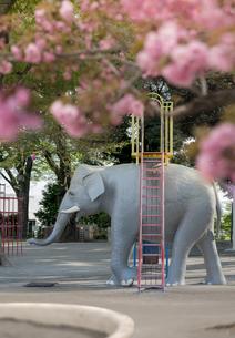飛鳥山公園の像遊具と桜の花の写真素材 [FYI01228467]