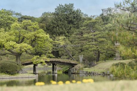 六義園の大泉水を結ぶ木製の田鶴橋の写真素材 [FYI01228481]