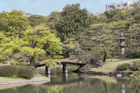 六義園の大泉水に木製の田鶴橋と石灯籠の写真素材 [FYI01228482]