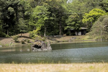 六義園の大泉水に立つ蓬莱島の写真素材 [FYI01228483]