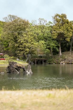 六義園の大泉水に立つ蓬莱島と木橋の写真素材 [FYI01228484]