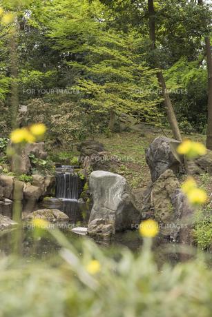 六義園の三尊石、枕流洞と水分石の写真素材 [FYI01228489]
