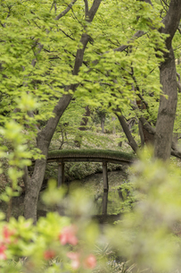 六義園のつつじ茶屋から見た剡渓流を渡る山影橋の写真素材 [FYI01228493]