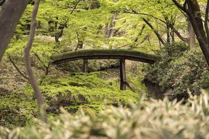 六義園のつつじ茶屋から見た剡渓流を渡る山影橋の写真素材 [FYI01228494]