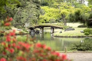 六義園の紀州から見た大泉水を渡る田鶴橋の写真素材 [FYI01228495]