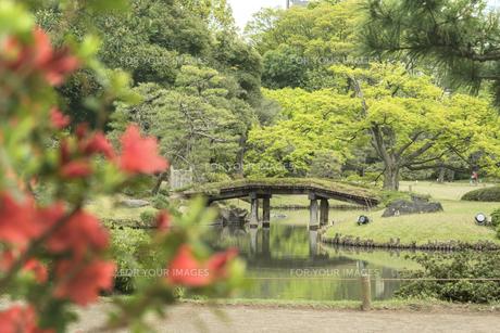 六義園の紀州から見た大泉水を渡る田鶴橋の写真素材 [FYI01228496]