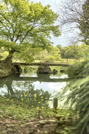 六義園の大泉水を渡る渡月橋の写真素材 [FYI01228498]