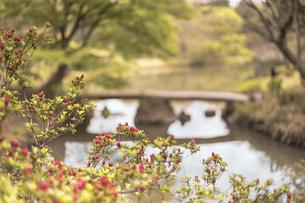 六義園の大泉水を渡る渡月橋の写真素材 [FYI01228501]