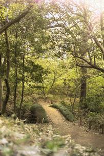 六義園の蛛道から見た剡渓流を渡る藤浪橋の写真素材 [FYI01228503]