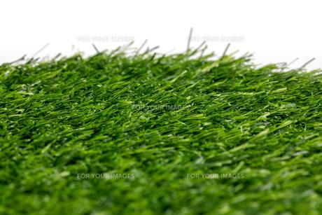 芝生の写真素材 [FYI01228755]