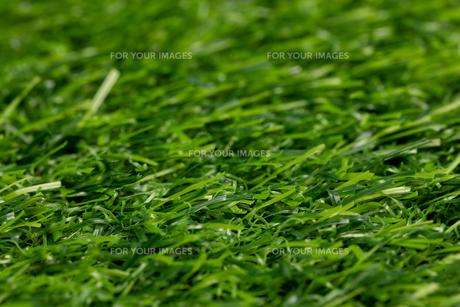 芝生の写真素材 [FYI01228757]