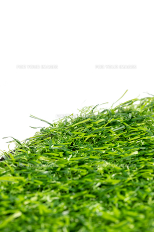芝生の写真素材 [FYI01228766]