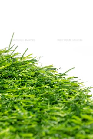 芝生の写真素材 [FYI01228768]