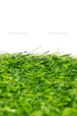芝生の写真素材 [FYI01228770]