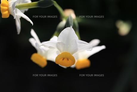 花の写真素材 [FYI01228967]