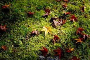 照らされた落ち葉の写真素材 [FYI01229021]