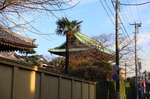 青空に映える古い寺院の屋根   千葉県市川市の法華経寺の写真素材 [FYI01229101]
